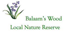 Friends of Balaam's Wood Local Nature Reserve